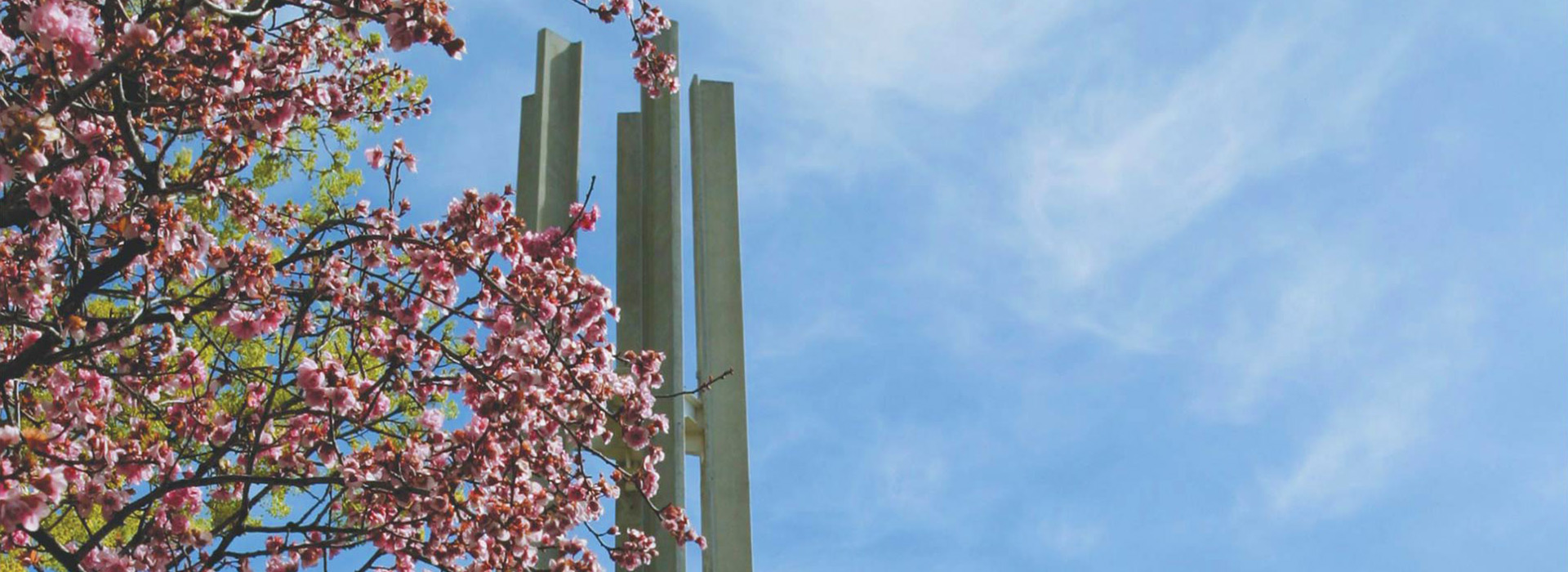 Tree blossoms and the CSI campus tower